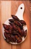 Tsaoko ou Cao Guo d'Amomum de fruit Photos stock