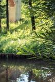Tsaritsyno公园储备的池塘晚夏 莫斯科俄国 免版税库存照片