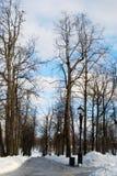 Tsaritsyno公园看法在莫斯科在冬天 老结构树 库存图片