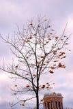 Tsaritsyno公园看法在莫斯科 秋天可用的例证结构树向量 免版税图库摄影