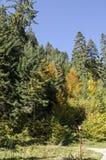 Tsarska或皇家Bistritsa公园休息的和步行与不同地树在近令人尊敬的秋季森林里由手段Borovets 免版税库存图片