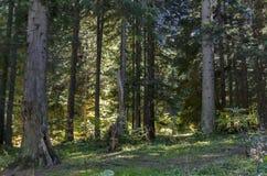 Tsarska或皇家Bistritsa公园休息的和步行与不同地树在近令人尊敬的秋季森林里由手段Borovets 库存图片