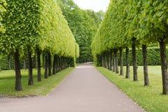 Tsarskoye Selo Pushkin, St Petersburg, allée en parc, arbres et arbustes, chemins de marche Image stock