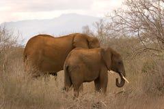 tsavo d'éléphants Photos stock