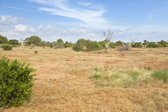 Tsavo East Landscape in Kenya Royalty Free Stock Photography