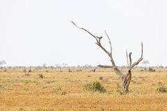 Tsavo East National Park, Kenya Royalty Free Stock Photos
