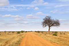 Tsavo East National Park, Kenya Stock Photography