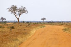 Tsavo East National Park, Kenya Royalty Free Stock Photography