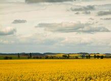 Tschechische Landschaft in der Blüte Stockbild