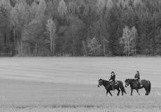 Tschechische Natur mit Pferden Lizenzfreie Stockbilder