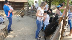 Tschechische Republik, Prag 16, im Juni 2017: Kinderspiel mit Tieren im Zoo stock footage