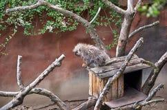 Tschechische Republik prag Prag-Zoo 12. Juni 2016 Lizenzfreie Stockfotografie