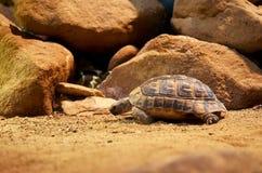 Tschechische Republik prag Prag-Zoo Schildkröte 12. Juni 2016 Lizenzfreie Stockfotos