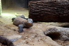 Tschechische Republik prag Prag-Zoo Varan 12. Juni 2016 Lizenzfreies Stockbild