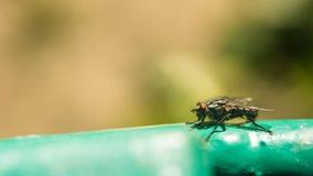 Tsetsefluga på yttersidaytterlighetförstoring Tsetseflugan orsakar att sova sjukdomen, som kan vara dödlig Royaltyfri Bild