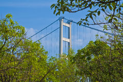 Tsing Ma In The Forest. Hong Kong famous architecture, Tsing Ma Bridge hide in the forest Stock Photos