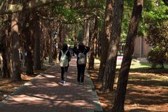Tsinghua University campus landscape Royalty Free Stock Photos