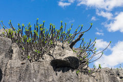 The Tsingy of Ankarana Stock Photography