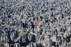 Tsingy Ankarana Στοκ φωτογραφία με δικαίωμα ελεύθερης χρήσης