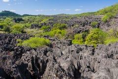 The Tsingy of Ankarana. The sea of Tsingy in Ankarana massif, northern Madagascar Stock Photography