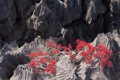Tsingy of Ankarana Madagascar Royalty Free Stock Photography