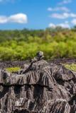 The Tsingy of Ankarana Royalty Free Stock Images