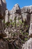 The Tsingy of Ankarana Royalty Free Stock Photos
