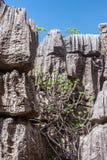 The Tsingy of Ankarana Stock Image
