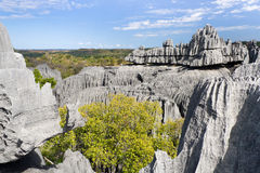 Tsingy de Bemaraha Stock Photography