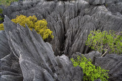 Tsingy de Bemaraha. Natural fenomenon in west Madagascar Royalty Free Stock Images