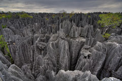 Tsingy de Bemaraha. Natural fenomenon in west Madagascar Stock Photo