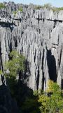 Tsingy de Bemaraha. Madagascar Royalty Free Stock Photography