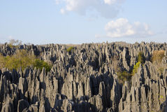 Tsingy de Bemaraha National πάρκο Παγκόσμια κληρονομιά της ΟΥΝΕΣΚΟ στοκ φωτογραφίες με δικαίωμα ελεύθερης χρήσης