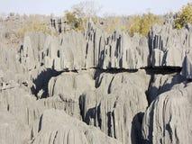 Tsingy de Bemaraha National Park. Unesco World Heritage Royalty Free Stock Photography