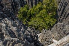 Tsingy De Bemaraha natury park Obraz Royalty Free