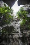 Tsingy de Bemaraha Paisaje típico con el árbol madagascar Imagen de archivo libre de regalías