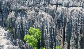 Tsingy de Bemaraha Reserva fotos de stock royalty free