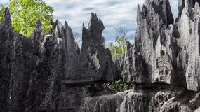 Tsingy de Bemaraha. The Tsingy de Bemaraha Strict Nature Reserve is located in the center west of the Province of Mahajanga, Madagascar royalty free stock images