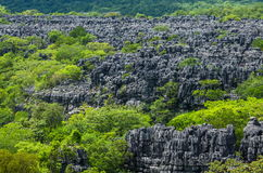 Tsingy de Bemaraha. Typical landscape. Madagascar. An excellent illustration royalty free stock photography