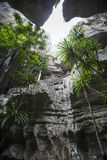 Tsingy de Bemaraha Typische Landschaft mit Baum madagaskar Lizenzfreies Stockbild