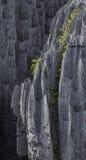 Tsingy de Bemaraha Typische Landschaft mit Baum madagaskar Lizenzfreie Stockfotografie