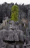 Tsingy de Bemaraha Typische Landschaft mit Baum madagaskar Stockbild