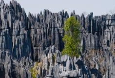 Tsingy de Bemaraha Typische Landschaft mit Baum madagaskar Lizenzfreies Stockfoto