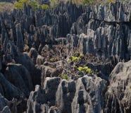 Tsingy de Bemaraha Typische Landschaft mit Baum madagaskar Stockbilder
