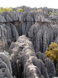 Tsingy Madagascar. Ankarana Reserve, Madagascar has many limestone karst pinnacles Royalty Free Stock Photography