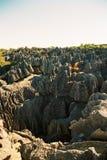 Tsingy Madagascar Fotos de archivo libres de regalías