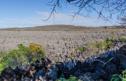 Tsingy in Madagascar. Grey Tsingy in Ankarana Park Madagascar Stock Photography