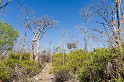 Tsingy in Madagascar Royalty Free Stock Photos