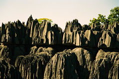 Tsingy Madagascar Royalty Free Stock Photo