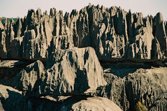 Tsingy Madagascar. The pinnacles of the Tsingy in Madagascar Stock Images